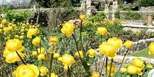 garden-planting-leeds