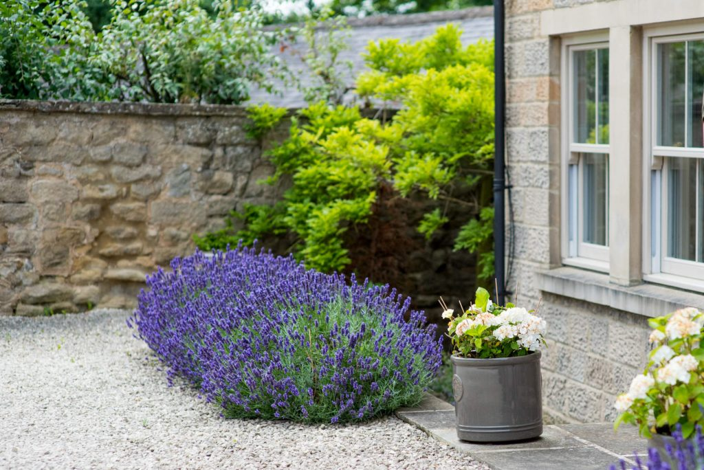 Lavender border. Harrogate Garden design and build