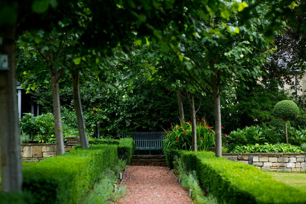 Lime Avenue of trees. Harrogate Garden DEsign and build