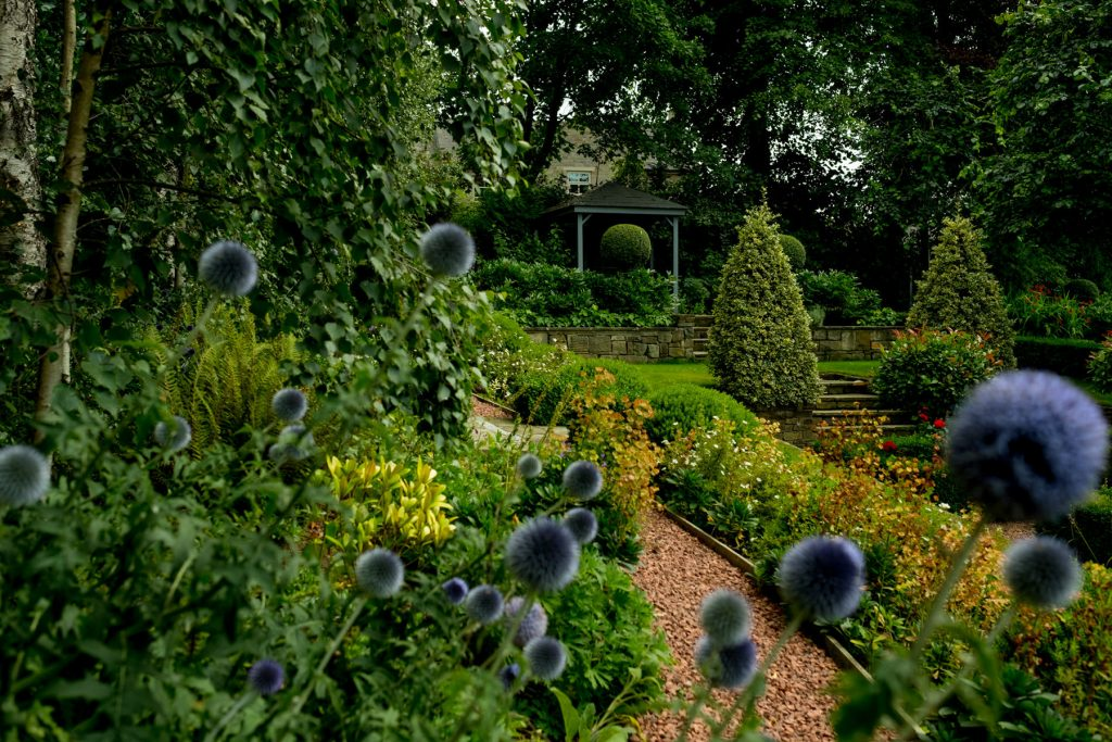 Echinops in formal English garden. Garden design and build in Ha
