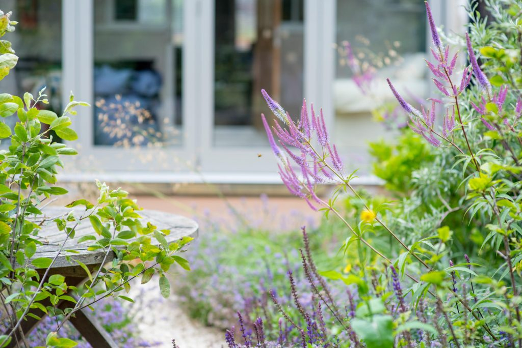 Small garden design with purple salvia