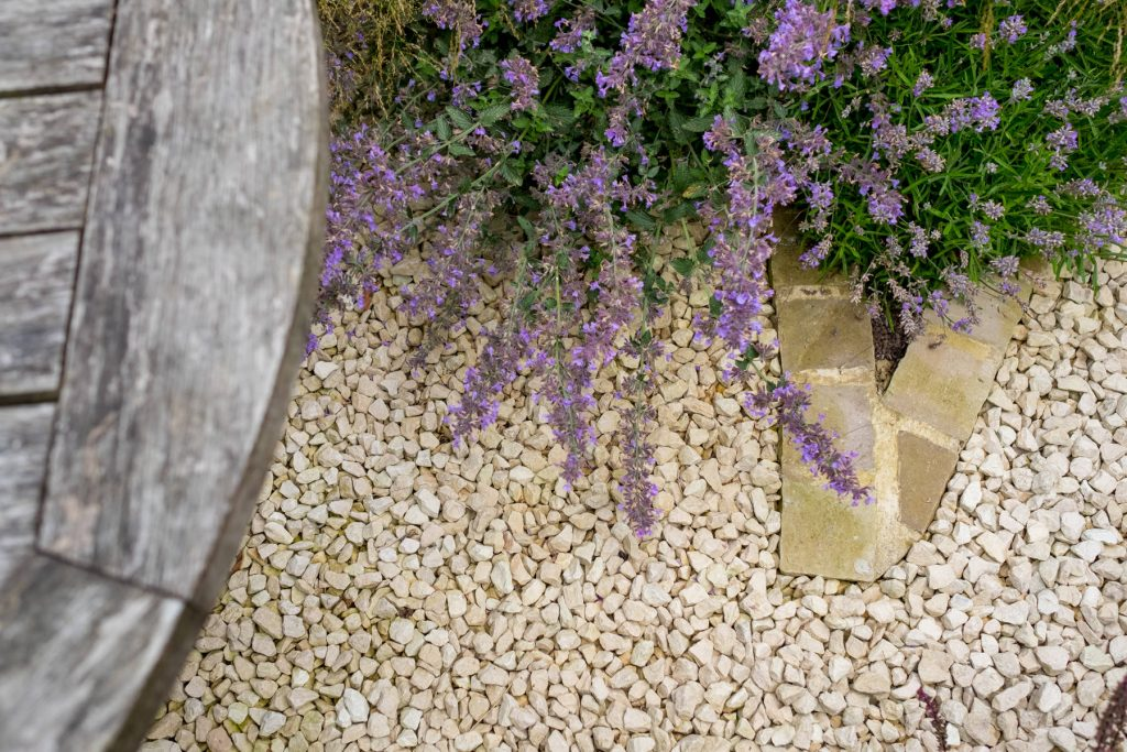 Salvia on gravel garden. Yorkshire garden design and build.