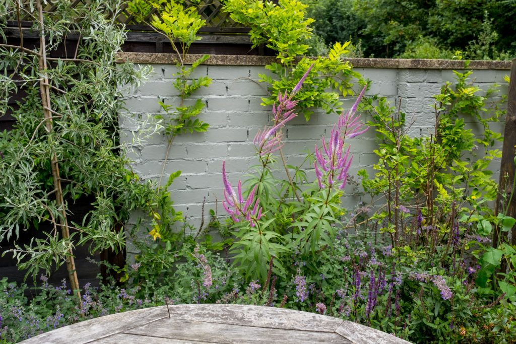 Grey wall in small garden. Yorkshire garden design and build.