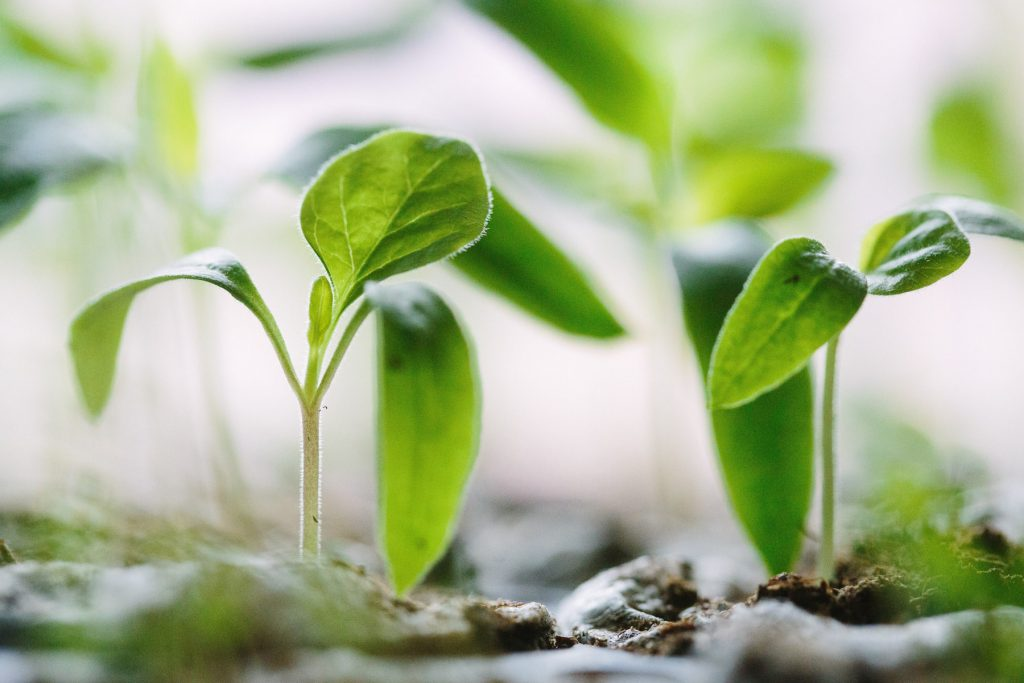 Seedlings. 5 things to do to prepare your garden for spring