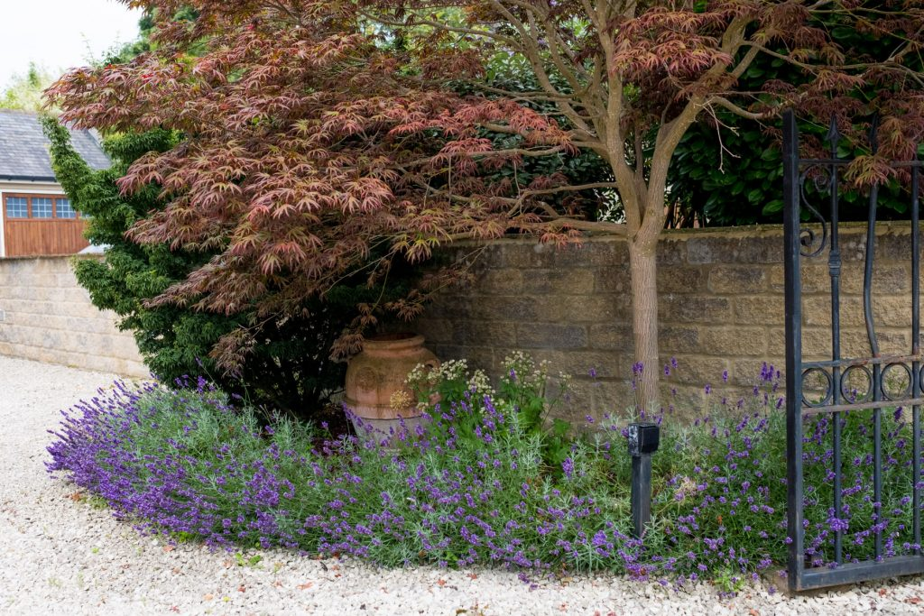 Driveway entrance with lavender border. Harrogate Garden Design