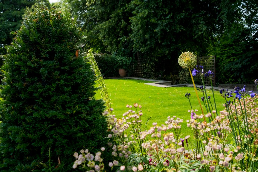 Astrantie and everygreen border. Garden Designers, Harrogate