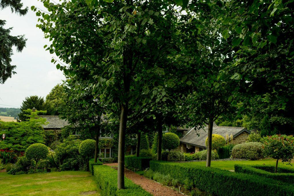 Lime avenue and gravel path with lavendar. Harrogate Garden desi