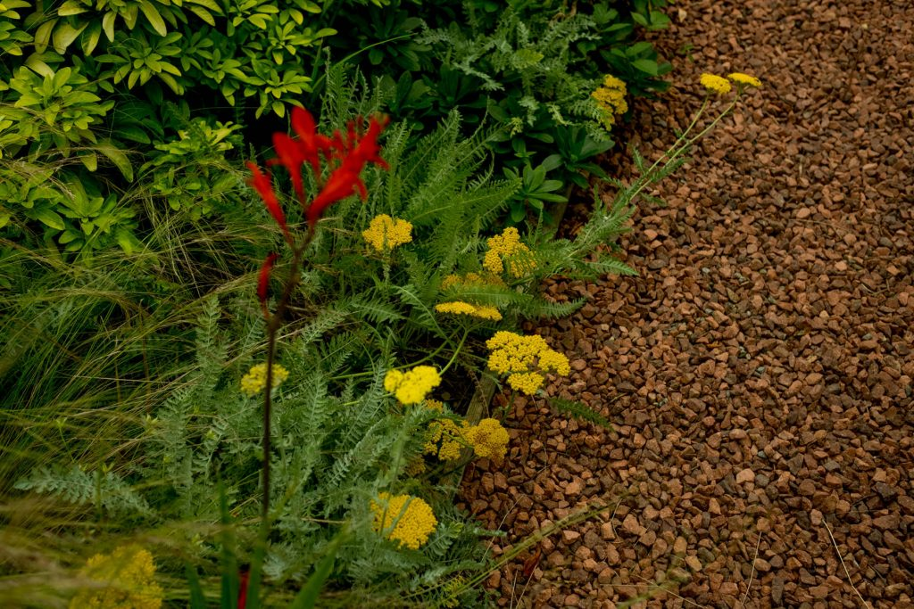 Formal planting and gravel path. Harrogate Garden design and bui