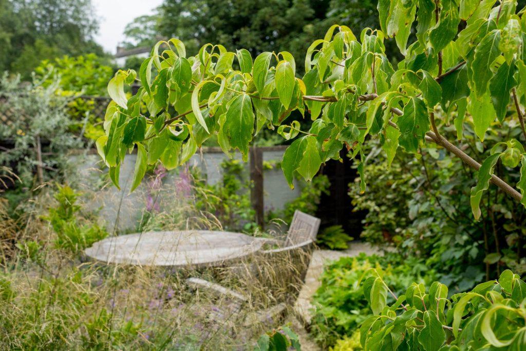 Planting in small garden. Leeds Garden design and build