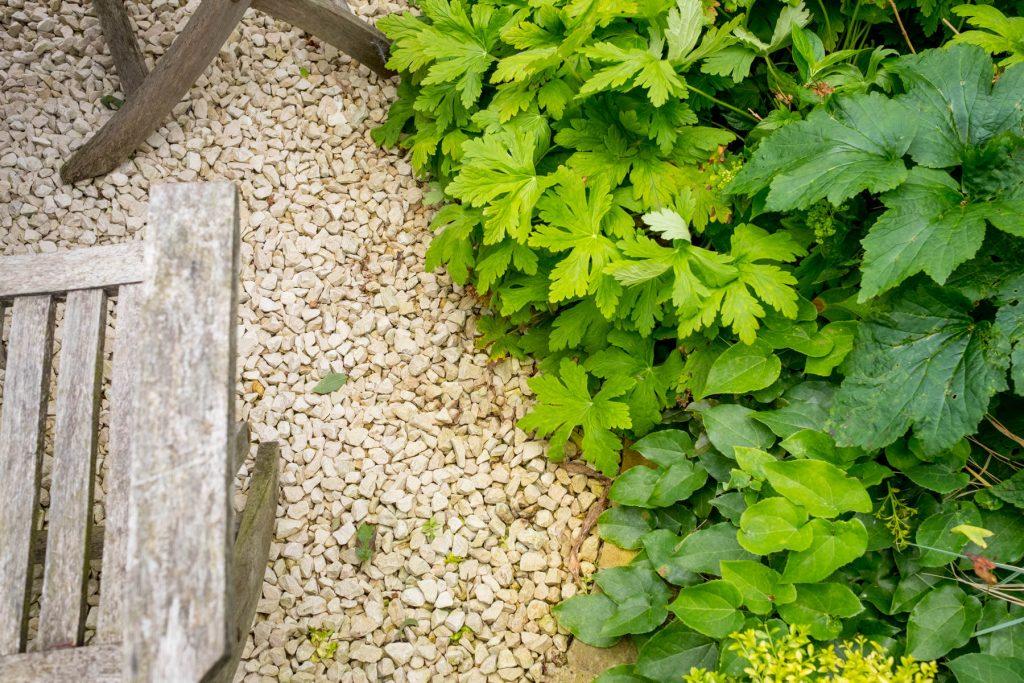 Geraniums on gravel patio. Yorkshire garden design and build.