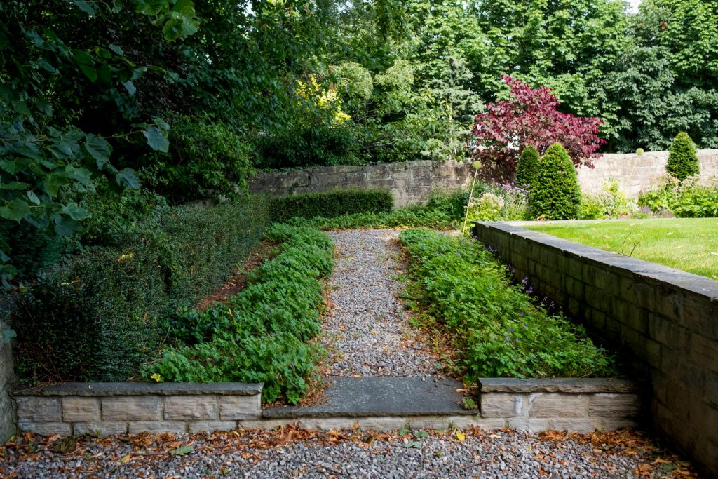 Gravel path with hedge and geraniums. Harrogate Garden DEsign an